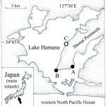 Occurrence of the bopyrid isopod Athelges takanoshimensis on hermit crabs in a brackish water lake, central Japan (Kazuya Nagasawa , Shoya Koyama and Fumihito Muto)